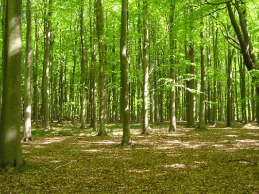 las - bioróżnorodność - ochrona środowiska