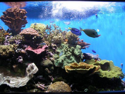 zasoby oceanów - rafa koralowa