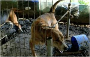 ochrona praw zwierzat 300x191 Ochrona praw zwierząt