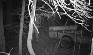 Kradzież drewna z lasu / Fot. archiwum Straży Leśnej