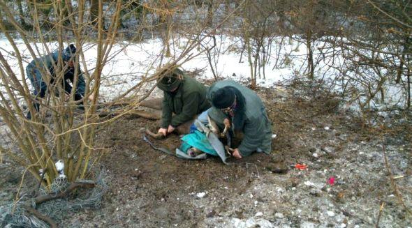 ratowanie jelenia