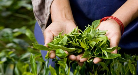 Rolnictwo ekologiczne w Niemczech / Fot. ruch-zdrowie.blogspot.com