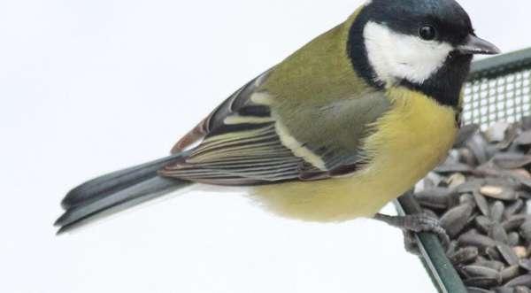 Dokarmianie ptaków zimą / Fot. otop.org.pl