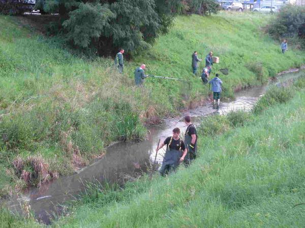 Setki litrów oleistej mazi w rzece. Strażacy musieli wymyć kaczki 4