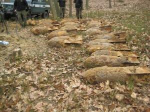 bomby w Puszczy Sandomierskiej
