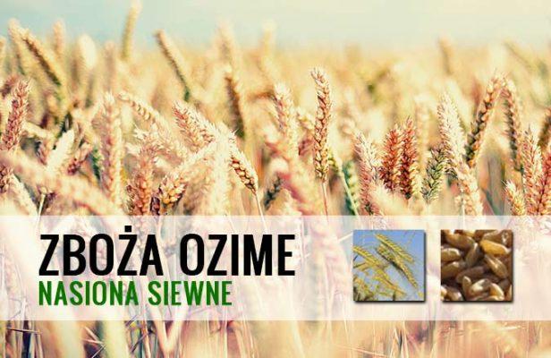 zboża ozime - odmiany zbóż