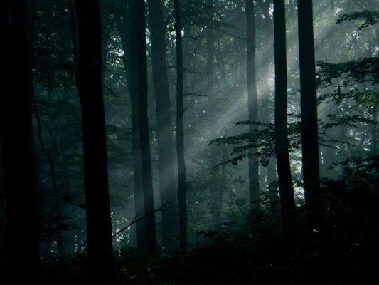 zakaz prywatyzacji lasów państwowych