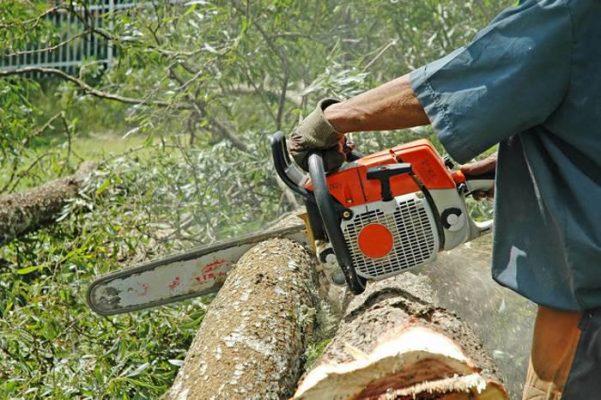 wycinka drzew - zezwolenie