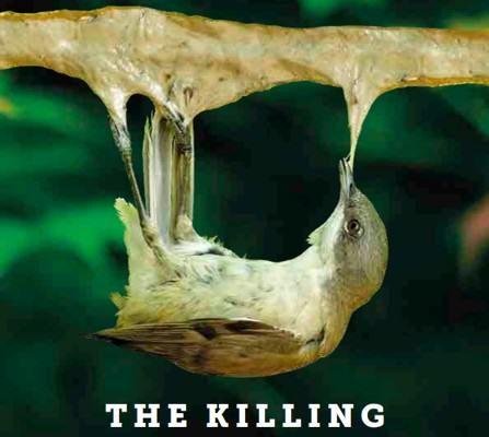 nielegalne zabijanie ptaków - birdlife - raport