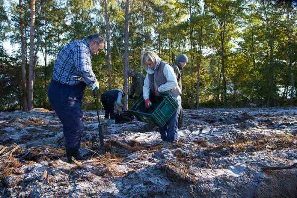las - odnawianie lasu