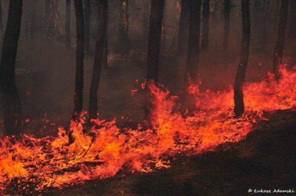 pożary lasów - Nadleśnictwo Celestynów