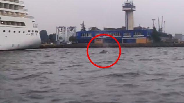 wieloryb - port - gdańsk