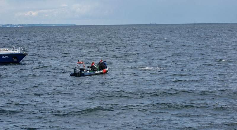 wieloryb - humbak - sieci