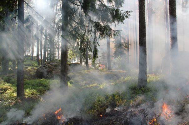 wypalanie traw - pożar lasu