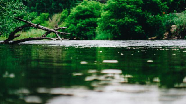 rzeka - przyroda