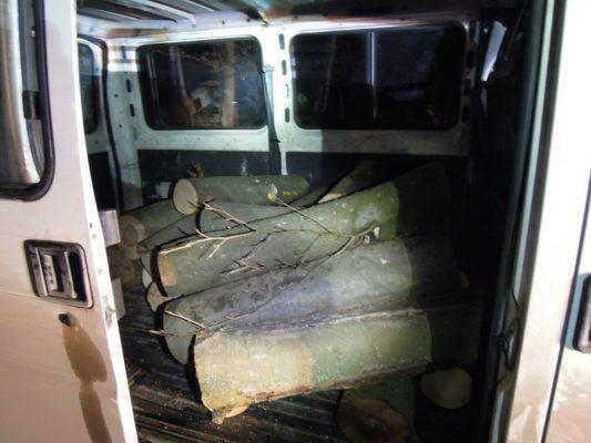 kradzież drewna z lasu