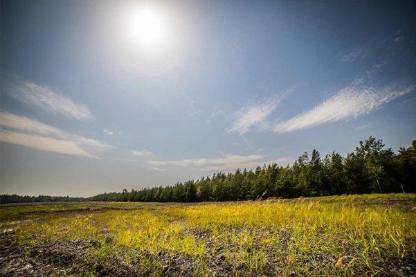 rekultywacja terenów - łąka