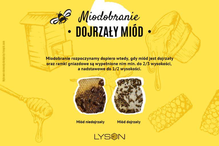 miodobranie - dojrzały miód