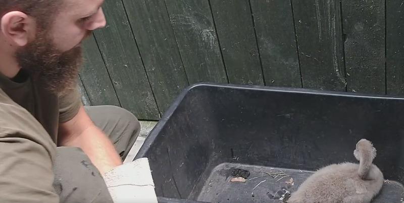 brzydkie kaczątko uratowane