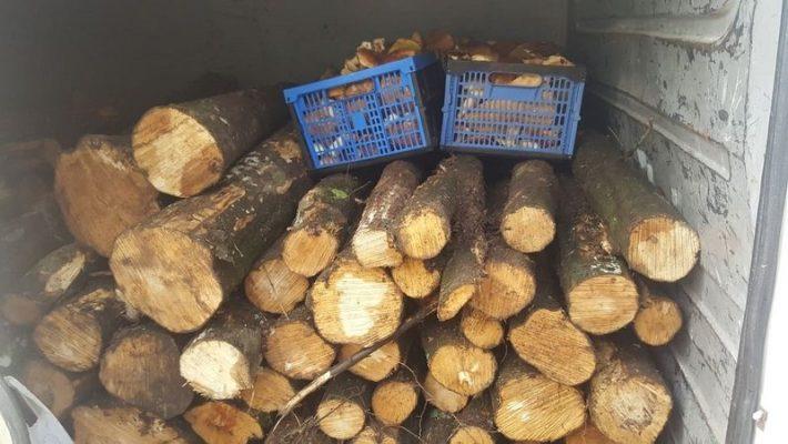 próba kradzieży drewna z lasu