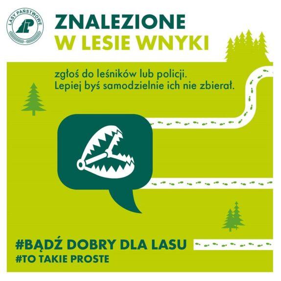 wnyki w lesie - infografika
