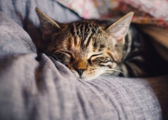 kot śpiący na rękach - łóżka dla kota