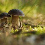 grzybobranie - grzyby w lesie
