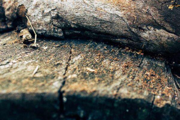 rębak do drewna - stare drewno